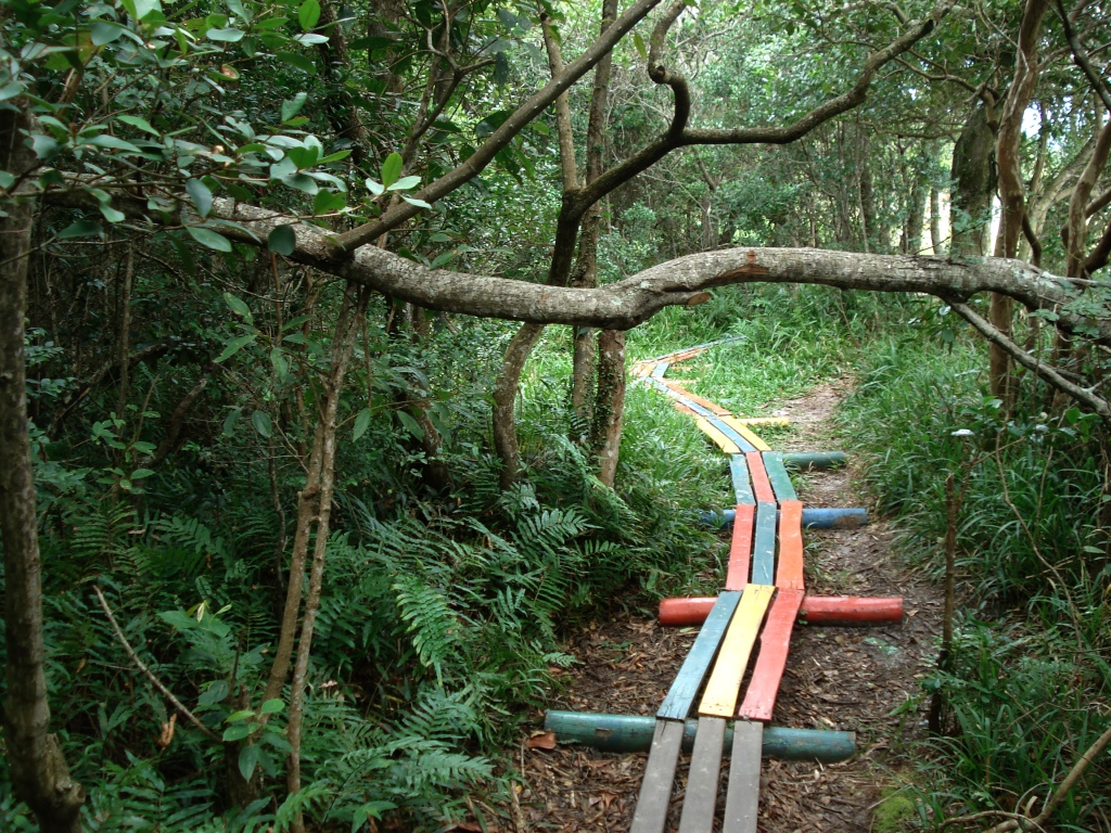 Colourful wooden slats laid down to make a gently winding path though a wild, dark green forest